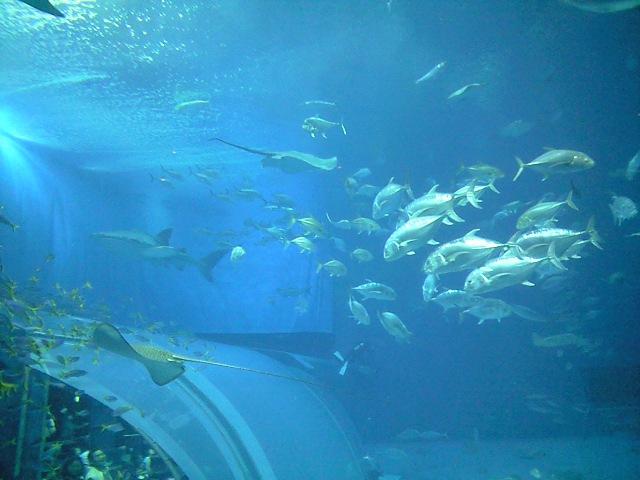 大量の魚が一つの水槽に