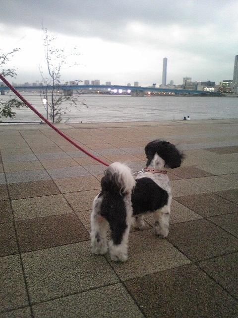 東京の公園は大きいです…