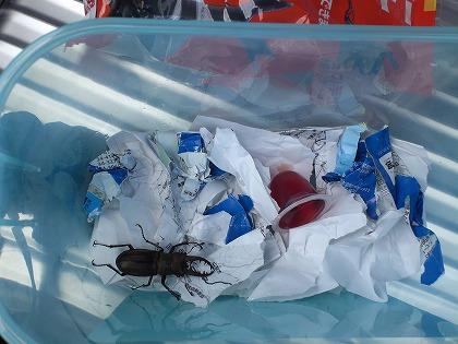 虫の生命維持装置を購入
