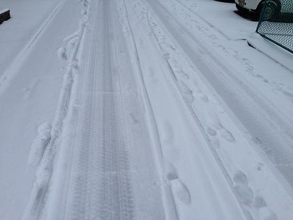 きちっと雪が積もったね