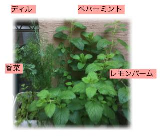 元気なお庭-3