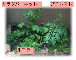 元気なお庭-5