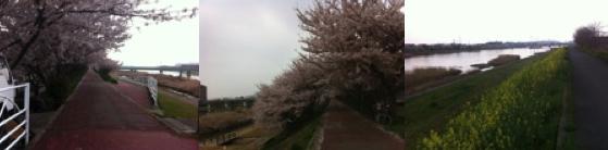 桜の季節2
