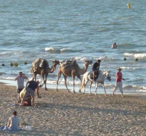 チュニジアのビーチらくだ写真