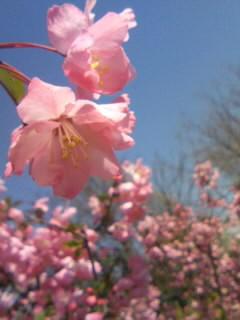 ピンクなお花01