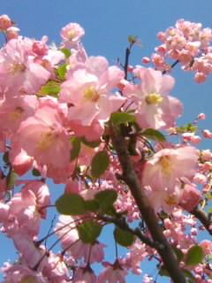 ピンクなお花02
