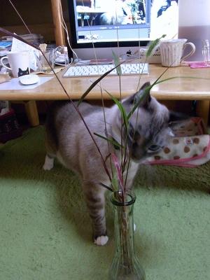 猫じゃらしとジャンくん02