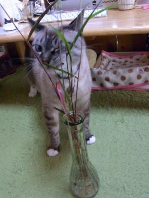 猫じゃらしとジャンくん04