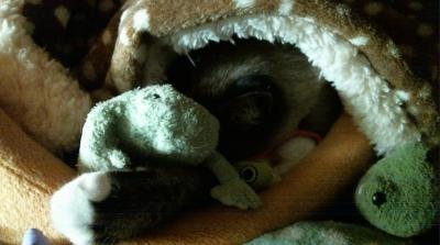 カエルくん抱え寝んね01