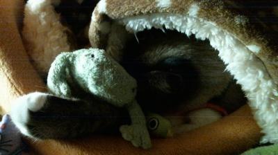 カエルくん抱え寝んね04