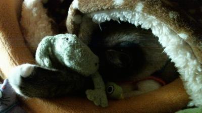 カエルくん抱え寝んね05