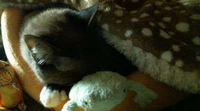 バンビさん毛布て寝んね01
