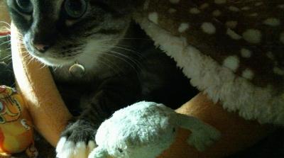 バンビさん毛布て寝んね02
