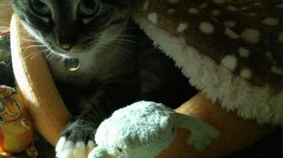 バンビさん毛布て寝んね03
