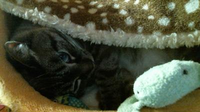 バンビさん毛布て寝んね04