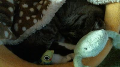 バンビさん毛布て寝んね05