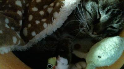 バンビさん毛布て寝んね06