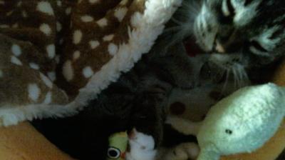 バンビさん毛布て寝んね07