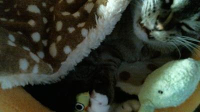 バンビさん毛布て寝んね08