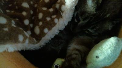 バンビさん毛布て寝んね10