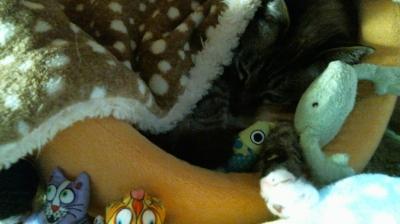バンビさん毛布て寝んね11