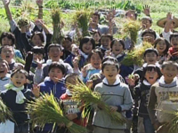 image:Paddy field is our classroom!