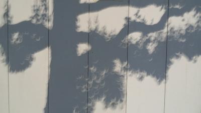 日食木漏れ日2