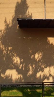 日食木漏れ日3