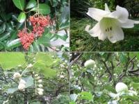 皇居の植物