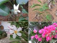 木に咲くスミレ