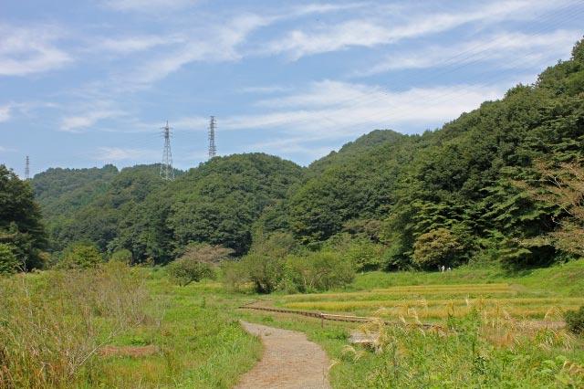 横沢入-1.jpg