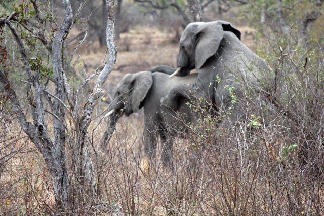 象のラブシーン-1.jpg