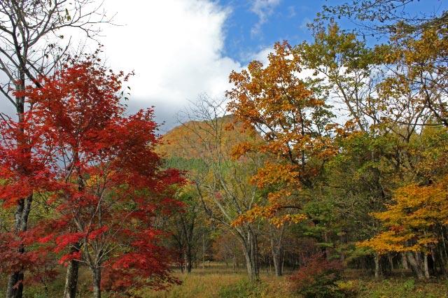 紅葉の中の烏帽子岳-1.jpg