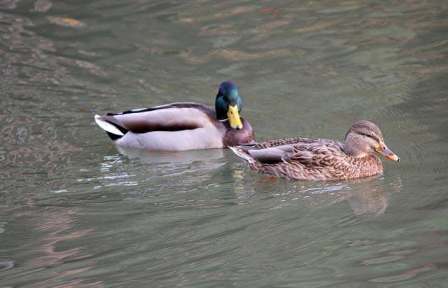 水鳥-1.jpg