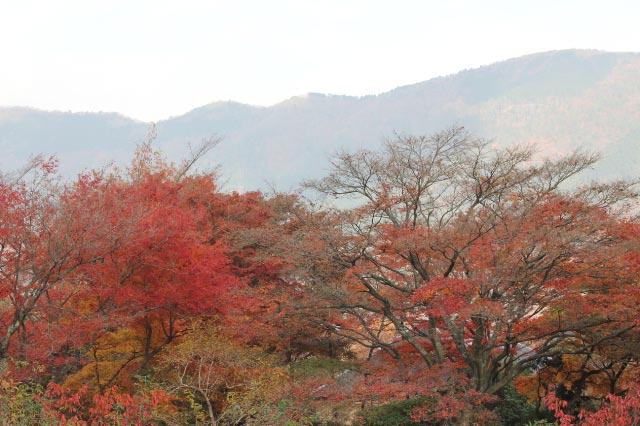 強羅公園-2.jpg