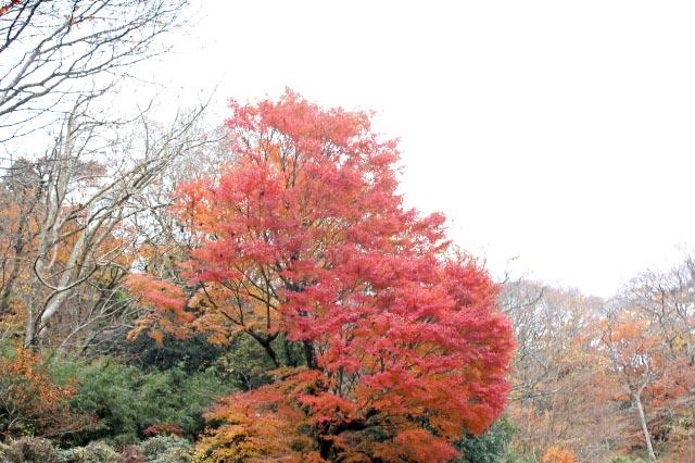 長安寺の紅葉-1.jpg