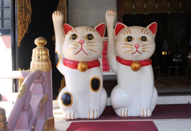 猫-1.jpg