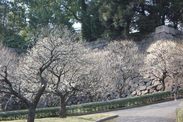 皇居2011.01.29_5686.jpg