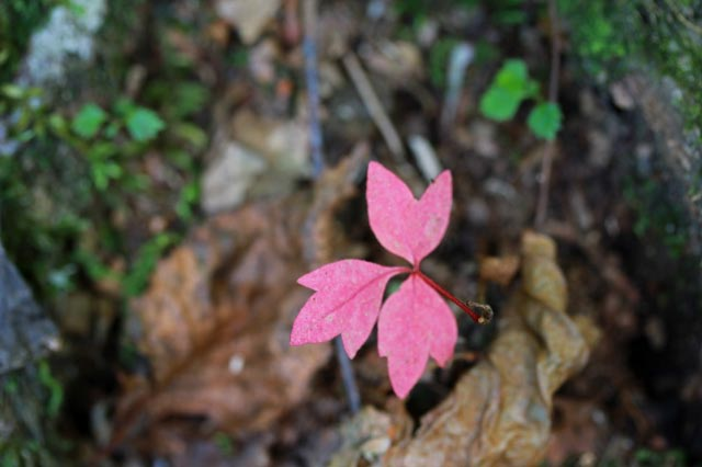 小さい秋-1.jpg