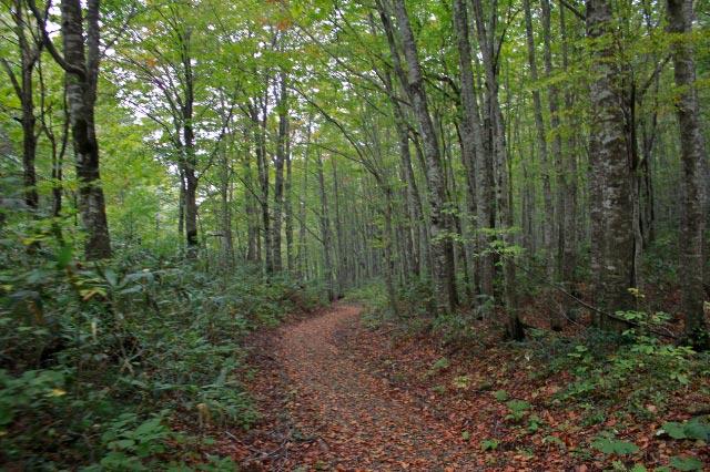 ブナの林-1.jpg