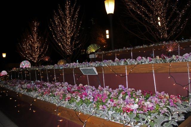 花壇フラッシュ-1.jpg