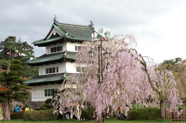 城と桜k-1.jpg