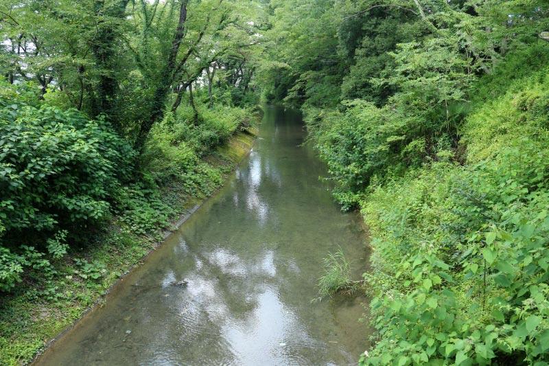 玉川上水-1.jpg