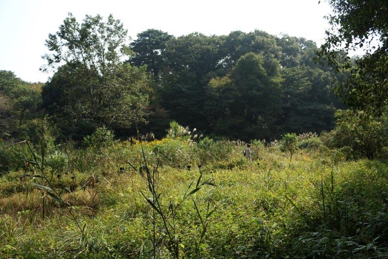 自然教育園-1.jpg