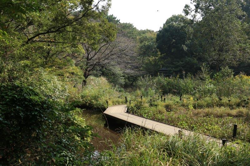 湿地-1.jpg