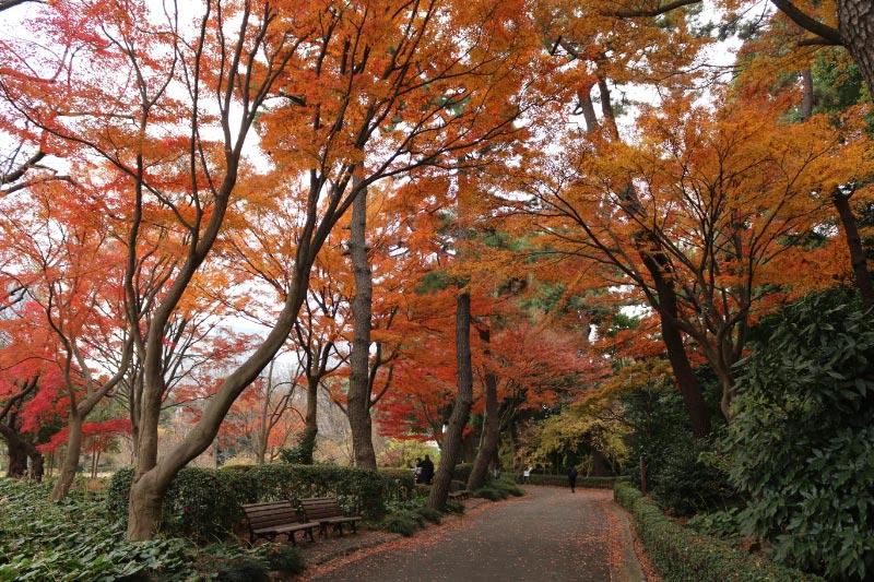 松の廊下-1.jpg