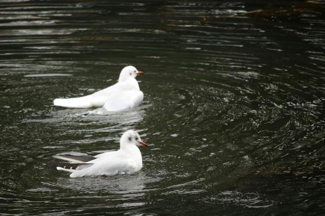 鳥-1.jpg