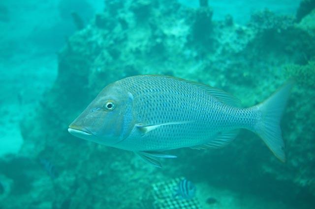 魚-1-1.jpg