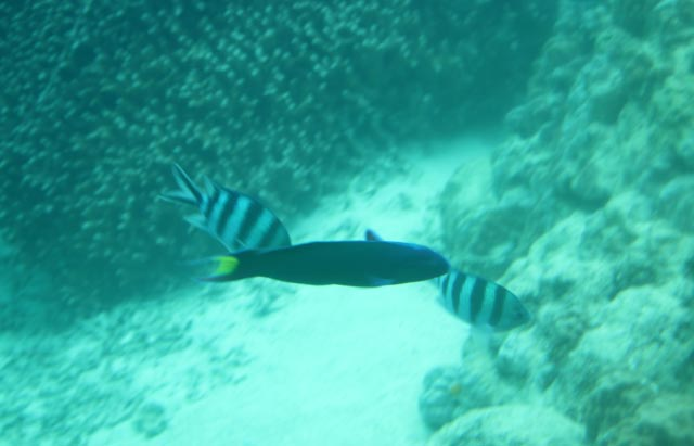 魚-1-3.jpg