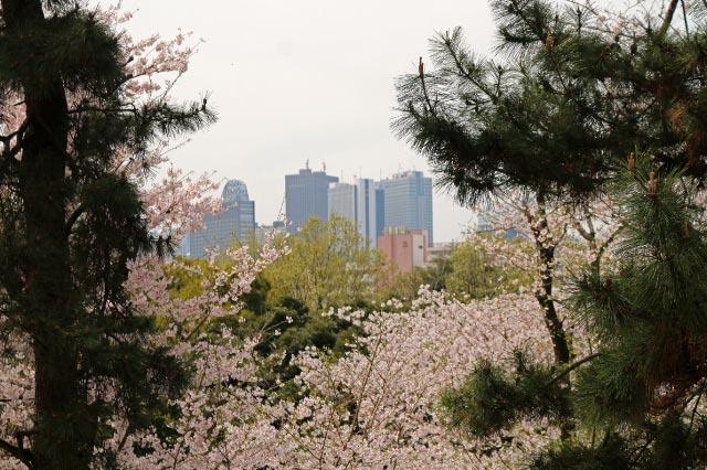 箱根山-1-1.jpg
